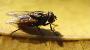 Избавиться от мух